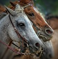 Horse Pair by April Robinson