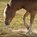 Horse Pawing In Pasture by Steve Gadomski