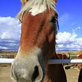 Horse Portrait by Aidan Moran