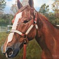 Red Dun Horse - Reds Done Dancin By Marilyn Nolan-johnson by Marilyn Nolan-Johnson