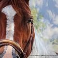 Horse Portrait Closeup by Ella Kaye Dickey