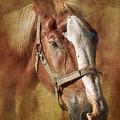 Horse Portrait II by Tom Mc Nemar