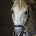 Horse Portrait by Joann Long