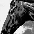 horse portrait PRINCETON black and white by Bets Klieger