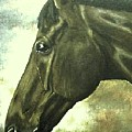horse portrait PRINCETON bright light by Bets Klieger