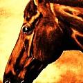 horse portrait PRINCETON brown tones by Bets Klieger