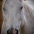 Horse Portrait by Scott McKay