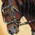 Horse Portrait  by Svetlana Ledneva-Schukina