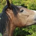 Horse Profile by Franco De Luca Calce Wildlife Photographer