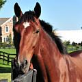 Horse Profile by Terri Winkler