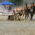 Horse Pull - Team A by Melissa Parks
