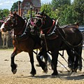 Horse Pull D by Melissa Parks