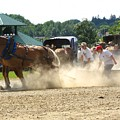 Horse Pull In St Stephen Nb by Melissa Parks