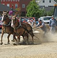 Horse Pull K by Melissa Parks