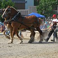 Horse Pull Team A by Melissa Parks