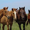 Horse Quartet by Mike Parker