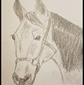 Rosie The Horse by Richard Howell