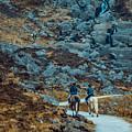 Horse Riders At Mahon Falls by Marc Daly