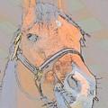 Horse by Robert Nelson