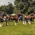 Horse Show by Chris Horsnell