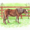 Horse Standing At The Ranch Watercolor  by Irina Sztukowski