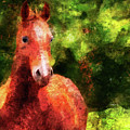 Horse Study #2 by Everlasting Equine Horse Art