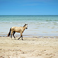 Horse Walking On Beach by Vitor Groba