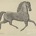 Horse Weather Vane by Rollington Campbell