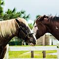 Horse Whisperer by Mary  Swann
