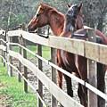 Horse Whisperers by Wayne Marsh