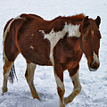 Horse With No Name by Jutta Maria Pusl