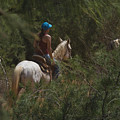 Horseback Riding Kauai Trail by Loriannah Hespe