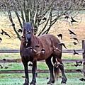 Horsebirds by Scotty Alston