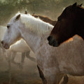 Horses-02 by Susan Kordish
