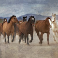 Horses-03 by Susan Kordish