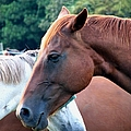 Horses 1 by J M Farris Photography