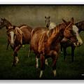 Horses 31 by Ingrid Smith-Johnsen