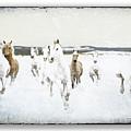 Horses 33 by Ingrid Smith-Johnsen