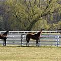 Horses 363 by Joyce StJames