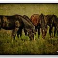 Horses 37 by Ingrid Smith-Johnsen