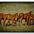 Horses 38 by Ingrid Smith-Johnsen