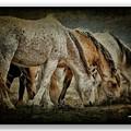 Horses 39 by Ingrid Smith-Johnsen
