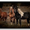 Horses 40 by Ingrid Smith-Johnsen