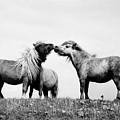 Horses 7 by Stephen Harris