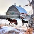 Horses And Barn by David Matthews