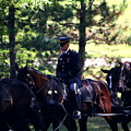 Horses At Arlington Cemetery by William Rogers