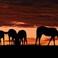 Horses At Sunset by Tina Meador