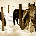 Horses by Craig Incardone