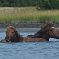 Horses Crossing by Dan Williams