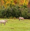 Horses Enjoying A Beautiful Autumn Day by Ken Morris